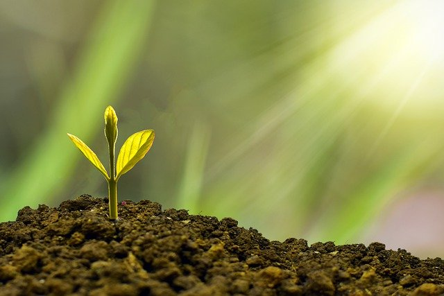 What's in the Honest diapers?-Sunshine on growing plant.
