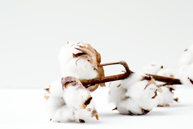 What's Jamie Kay?-White cotton balls on the plant.
