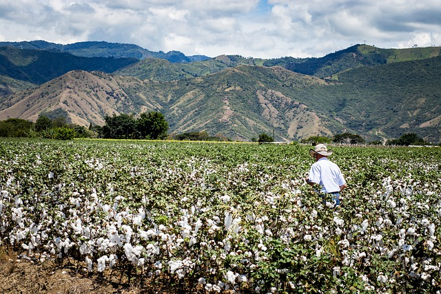 Do biodynamic baby clothes exist?-Cotton farm with a man walking in the field and a scenic background of mountains.